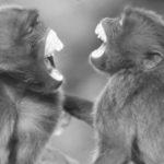 Risate contagiose anche nel mondo animale