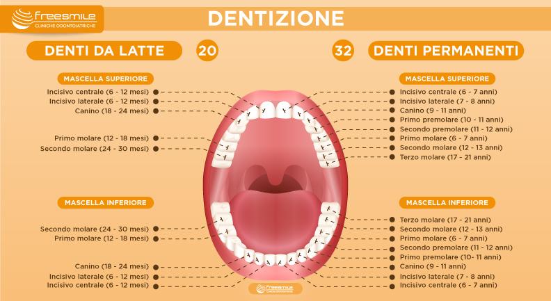 Sviluppo dentizione bambini adulti