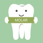 la funzione dei denti